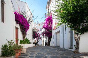 calle empedrada con casas blancas y una bugambilia florecida